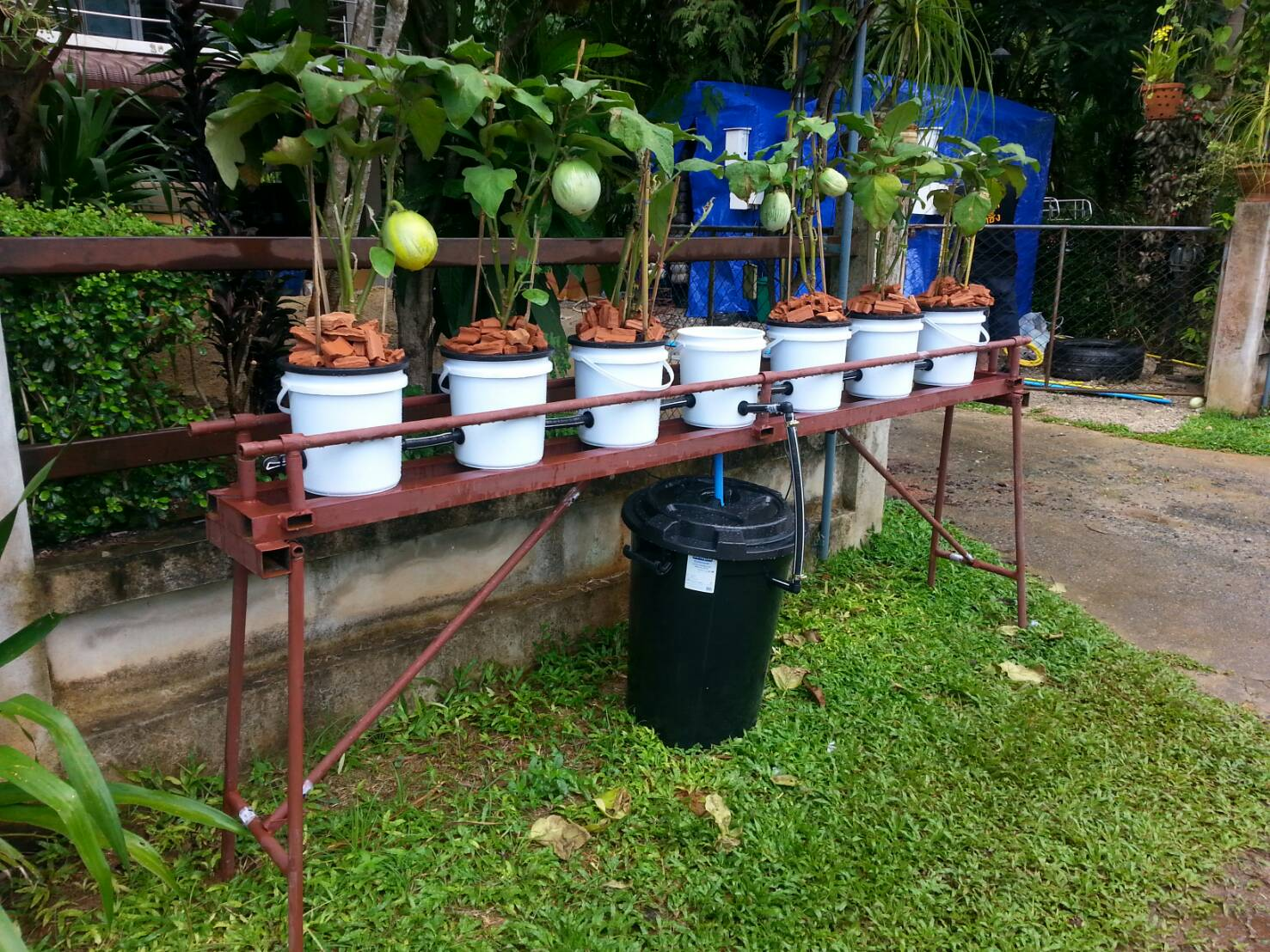 ชุดถังปลูกผักอัตโนมัติ Big pot ระบบน้ำขึ้น-น้ำลง (FAD) ครบชุด