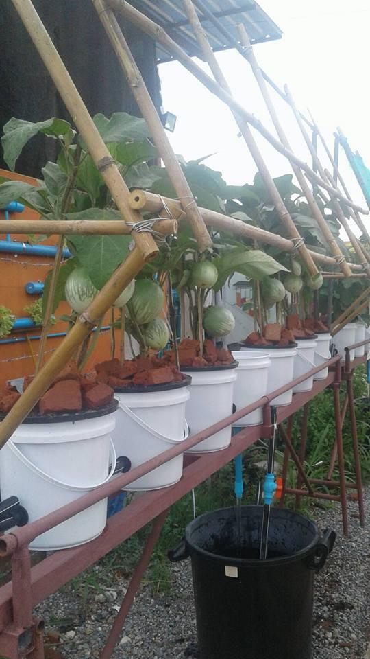 ชุดถังปลูกผักอัตโนมัติ Big pot ระบบน้ำขึ้น-น้ำลง (FAD) เฉพาะชุดถังปลูก