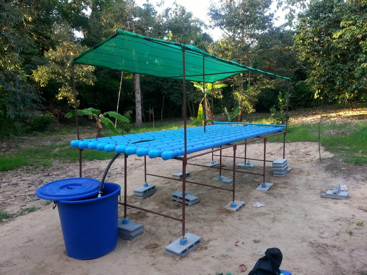 ชุดแปลงปลูกผักอัตโนมัติ ขนาด 150 หลุมปลูก ระบบน้ำขึ้น-น้ำลง(FAD)
