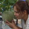 อบรมปลูกผักไฮโดรอย่างมืออาชีพ