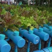 แปลงผักสวนครัวอัตโนมัติ ระบบน้ำขึ้น-น้ำลง
