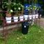 ชุดถังปลูกผักอัตโนมัติ Big pot ระบบน้ำขึ้น-น้ำลง (FAD) ครบชุด thumbnail 1