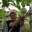 ชุดถังปลูกผักอัตโนมัติ Big pot ระบบน้ำขึ้น-น้ำลง (FAD) ครบชุด thumbnail 6