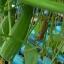 ชุดแปลงปลูกผักอัตโนมัติขนาด 35 หลุมปลูก ระบบน้ำขึ้น-น้ำลง(FAD) thumbnail 8