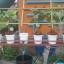 ชุดถังปลูกผักอัตโนมัติ Big pot ระบบน้ำขึ้น-น้ำลง (FAD) เฉพาะชุดถังปลูก thumbnail 3