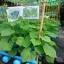ชุดแปลงปลูกผักอัตโนมัติขนาด 35 หลุมปลูก ระบบน้ำขึ้น-น้ำลง(FAD) thumbnail 7