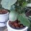 อบรมปลูกผักไฮโดรอย่างมืออาชีพ thumbnail 2
